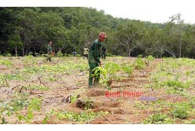 Cao su Phú Riềng phát triển rừng cao su bền vững.